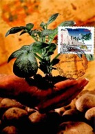 Carte Maximum 2009 - Flore Des Régions. La Flore Du Nord. La Pomme De Terre (Nord Pas De Calais). - Maximum Cards