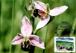 Carte Maximum 2009 - Flore Des Régions. La Flore Du Nord. L'ophreys Abeille (Chamapagne-Ardenne). - Maximum Cards