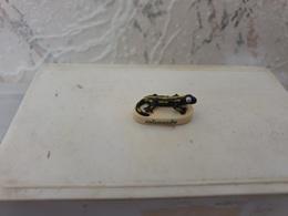 Féve Salamandre - Dessins Animés