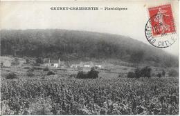 GEVREY CHAMBERTIN Planteligone - Gevrey Chambertin