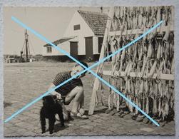 Photo NIEUWPOORT 1962 Oude Huis Kust Côte Belgïe Vis Poisson Pêche Visser - Lieux
