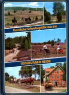 Luneburger Heide - Lüneburger Heide