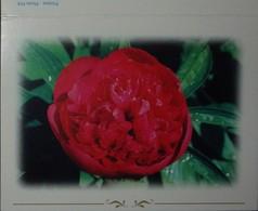 Petit Calendrier Poche 2002 Fleur Pivoine - Calendars