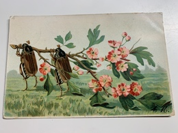 Cp Insecte Fleur A.M - Insecten