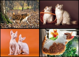 2020-026-029 Russia 4 Postal Cards Fauna Of Russia. Cats (card) - Gatti