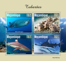 Mozambique 2019  Fauna Sharks   S201910 - Mosambik