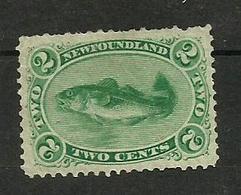 Terre-neuve N°21 Cote 50 Euros - Newfoundland
