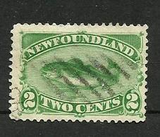 Terre-neuve N°36 Cote 30 Euros - Newfoundland