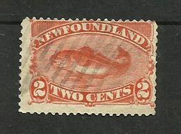 Terre-neuve N°41 Cote 8 Euros - Newfoundland