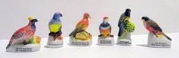 Fèves Brillantes - Les  Oiseaux Exotiques X 6 - Animali
