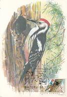 BIRDS, MIDDLE SPOTTED WOODPECKER, MAXIMUM CARD, 1985, ROMANIA - Specht- & Bartvögel