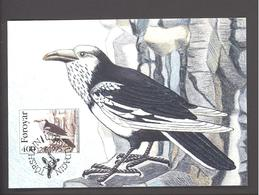 Carte Maximum Oiseaux - FDC  -  Iles Féroé  - Corvus Corax (Corbeau)  - Timbre N°FO 284 - Féroé (Iles)
