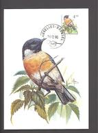 Carte Maximum - FDC - Oiseaux De Buzin - Traquet Pâtre - Timbre N° 2397 - 1985-.. Pájaros (Buzin)