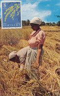D38765 CARTE MAXIMUM CARD 1961 SURINAM - RICE FIELDS ORYZA CP ORIGINAL - Landbouw