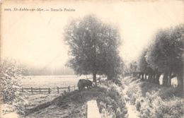 14-SAINT AUBIN SUR MER-N°359-G/0105 - Saint Aubin