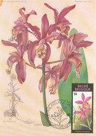 D38795 CARTE MAXIMUM CARD 1990 BELGIUM - ORCHID CATTLEYA CP ORIGINAL - Orchideeën