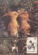BIRDS, HOOPOE, MAXIMUM CARD, 1993, ROMANIA - Specht- & Bartvögel