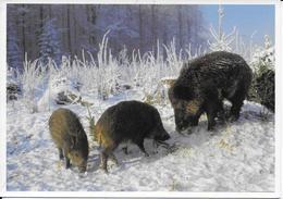 AF 3  Wild Zwijn - Cerdos