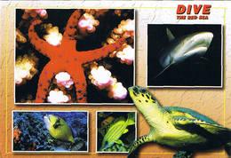 Egypte > La Mer Rouge ( Requin, Tortue, étoile De Mer...) - Zonder Classificatie