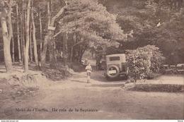 Mont-de-l'Enclus Un Coin De La Sapinière - Mont-de-l'Enclus