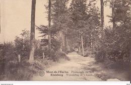 Mont-de-l'Enclus Kluisberg Promenade Au Bois - Kluisbergen