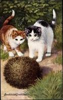 Cp Zwei Katzen Und Ein Igel, Stachliche Geschichte - Tierwelt & Fauna
