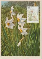 Irlande Carte Maximum Fleurs 1990 Narcisses 732 - Cartoline Maximum