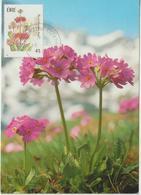 Irlande Carte Maximum Fleurs 1990 Primevères 734 - Cartoline Maximum