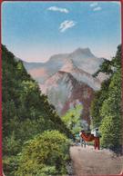 Madeira Portugal Rare Old Postcard - Madeira