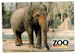 POSTAL POST CARD PARQUE ZOOLÓGICO ZOO DE BARCELONA ELEPHANT ÉLÉPHANT ELEFANT INDIAN ASIÁTICO ASIA PARK PARC ZOOLOGIQUE.. - Monos