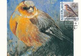 D38906 CARTE MAXIMUM CARD 2012 NETHERLANDS - LE PINSON FINCH CP ORIGINAL - Zangvogels