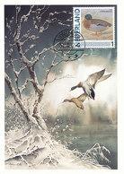 D38907 CARTE MAXIMUM CARD 2012 NETHERLANDS - COMMON DUCK ANAS CP BUZIN ORIGINAL - Eenden