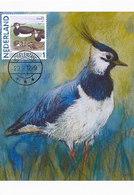 D38908 CARTE MAXIMUM CARD 2012 NETHERLANDS - VANNEAU LAPWING CP ORIGINAL - Vogels