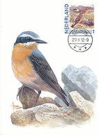 D38909 CARTE MAXIMUM CARD 2012 NETHERLANDS - TRAQUET - OENANTHE - TAPUIT CP BUZIN ORIGINAL - Zangvogels
