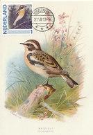 D38910 CARTE MAXIMUM CARD 2013 NETHERLANDS - SAXICOLA WHINCHAT CP ORIGINAL - Zangvogels