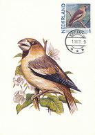 D38911 CARTE MAXIMUM CARD 2011 NETHERLANDS - HAWFINCH GROSBEC CP ORIGINAL - Zangvogels