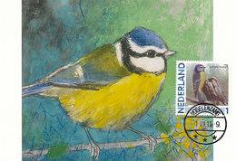 D38912 CARTE MAXIMUM CARD 2011 NETHERLANDS - MESANGE BLEUE PARUS BLUE TIT CP BUZIN ORIGINAL - Zangvogels