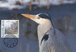 D38914 CARTE MAXIMUM CARD 2011 NETHERLANDS - HÉRON CENDRÉ ARDEA CINEREA CP ORIGINAL - Kraanvogels En Kraanvogelachtigen