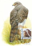 D38915 CARTE MAXIMUM CARD 2011 NETHERLANDS - ACCIPTER GOSHAWK CP ORIGINAL - Arends & Roofvogels