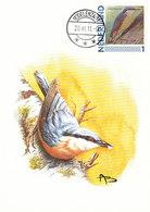 D38919 CARTE MAXIMUM CARD 2011 NETHERLANDS - SITTA EUROPAEA NUTHATCH CP BUZIN ORIGINAL - Vogels