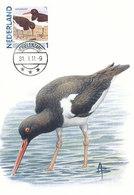 D38920 CARTE MAXIMUM CARD 2011 NETHERLANDS - HUITRIER PIE OYSTERCATCHER CP BUZIN ORIGINAL - Vogels