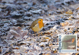D38921 CARTE MAXIMUM CARD 2011 NETHERLANDS - RED ROBIN ROUGE GORGE CP ORIGINAL - Zangvogels