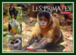 CPM Singe Monkey Primates Guadeloupe Zoo Des Mamelles écrite - Monos