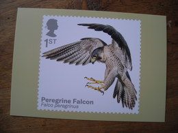 Oiseaux De Proie, Birds Of Prey, Peregrin Falcon Faucon Pèlerin - Briefmarken (Abbildungen)