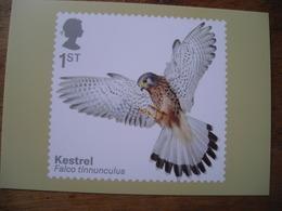 Oiseaux De Proie, Birds Of Prey, Kestrel, Faucon Crécerelle - Briefmarken (Abbildungen)