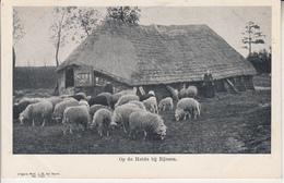 Op De Heide Bij RIJSSEN  PRIX FIXE - Rijssen