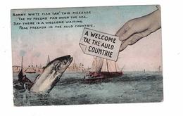 "SCOTLAND, UK, ""Bonny White Fish Take This Message..Far Over The Sea.."". Pre-1920 Postcard - Ecosse"