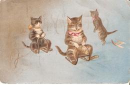 147) Chats - Katten - Cats  - L'état Moyen - Gatos