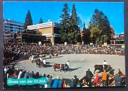 St. Gallen 1979 / Gruss Von Der Olma/ Viehschau - SG St. Gallen