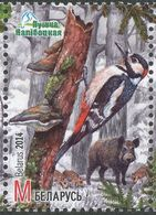 Biélorussie; Belarus.2014     Pic épeiche    Great Spotted Woodpecker - Specht- & Bartvögel